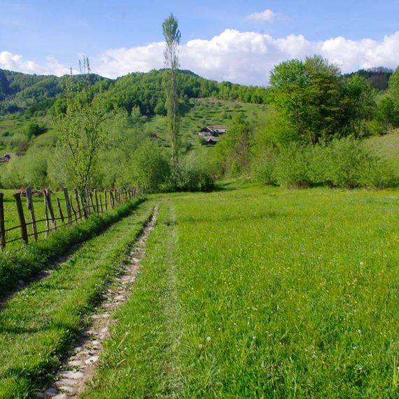 Parcela faneata, Leordina, Maramures, pe Valea Satului